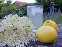 My Midsummer Night's Dream – elderflower cordial