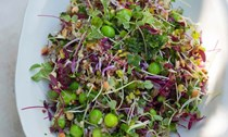 Quinoa with peas and sprouted seeds