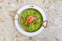 Red mullet with arroz verde